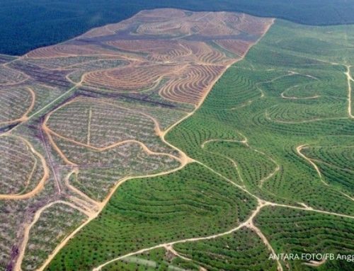 Masih ada 2,6 juta hektare lahan sawit yang masuk kawasan hutan